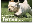 Recallkarten für Jugendliche, Motiv Hundetrab