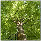 Deckenbild, Motiv Baum