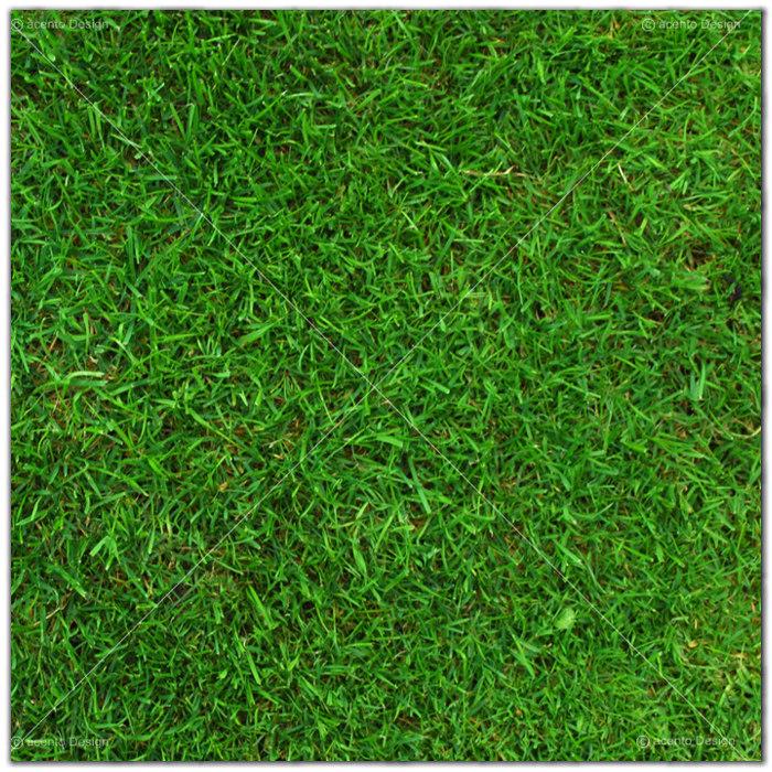Deckenbild Rasen