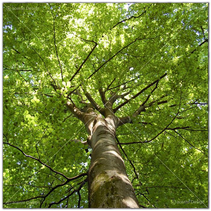 Deckenbild, Der Baum